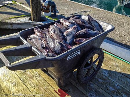 Alaska-Rockfish-fishing-in-Whittier-3