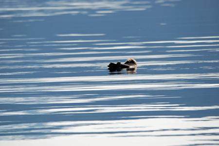 Prince-William-Sound-Eco-Tours-Crazy-Rays-Adventures-Sea-Otter